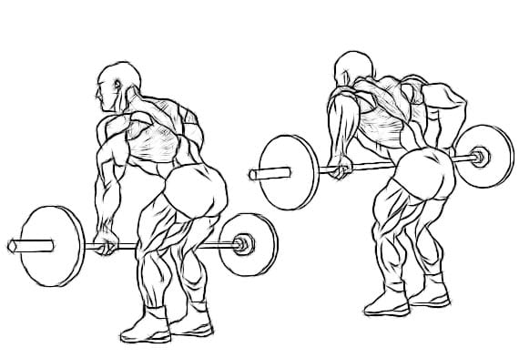 Bent over rows are the single most effective back building exercise in existence